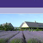 Marlborough Lavender website design